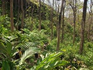 hutan jati Logending